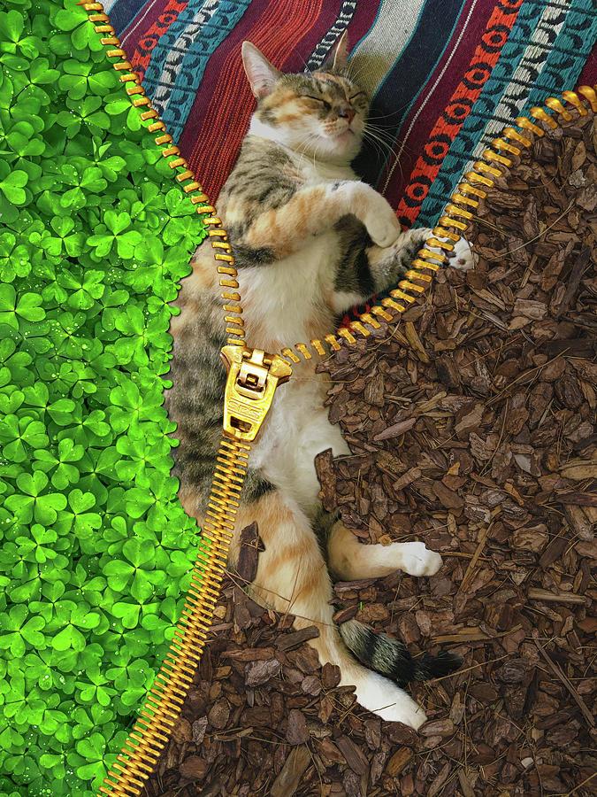 Corona Tortoiseshell Tabby Cat And Zipper Surreal Digital Art
