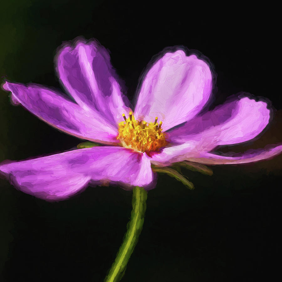 Cosmos Flowers Coreopsideae 124  by Rich Franco
