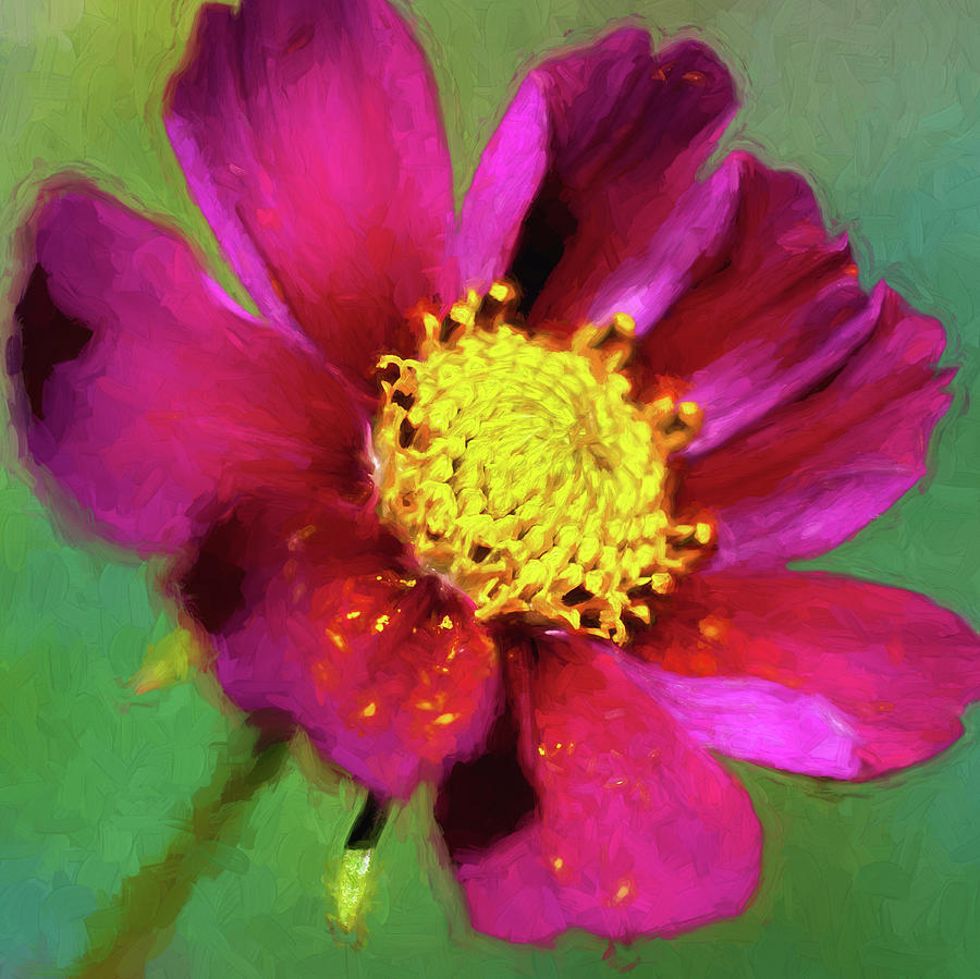 Cosmos Flowers Coreopsideae 129 by Rich Franco