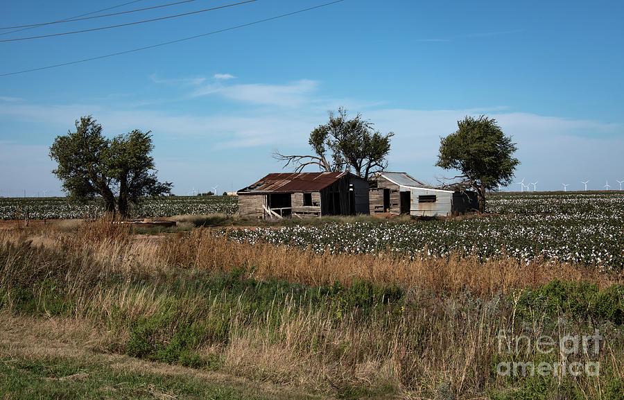Cotton Farm House by Mae Wertz