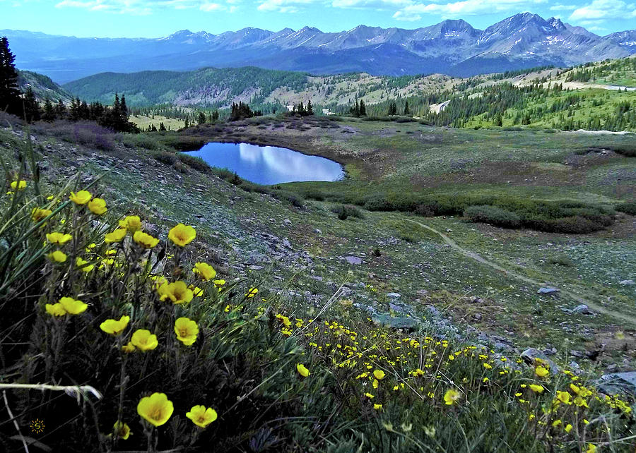 Cottonwood Pass Photograph by Staci Grimes