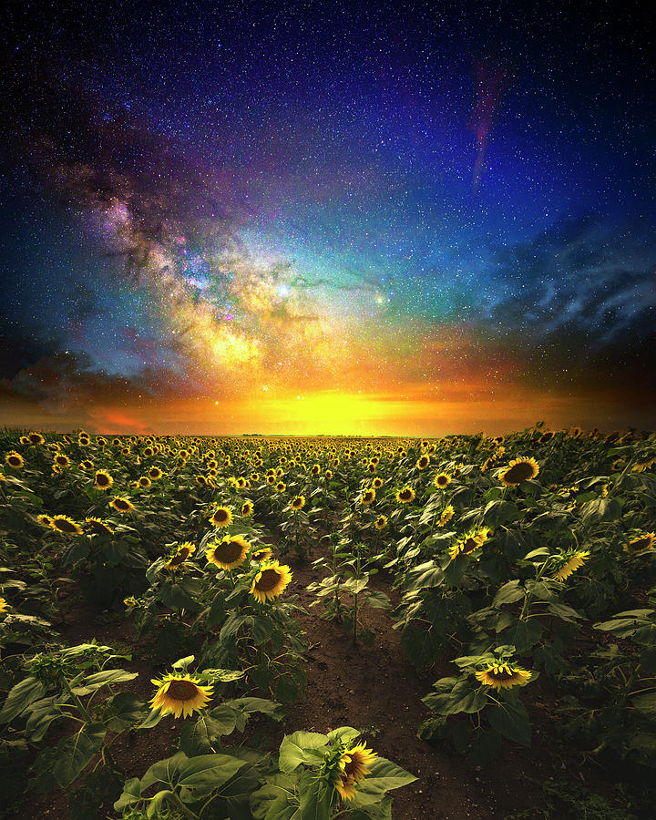 Sunflowers Photograph - Counting Stars by Aaron J Groen