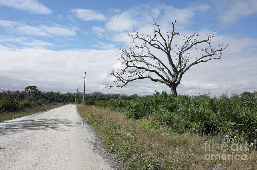 Country Road Photograph - Country Road And Solitary Tree by Felix Lai