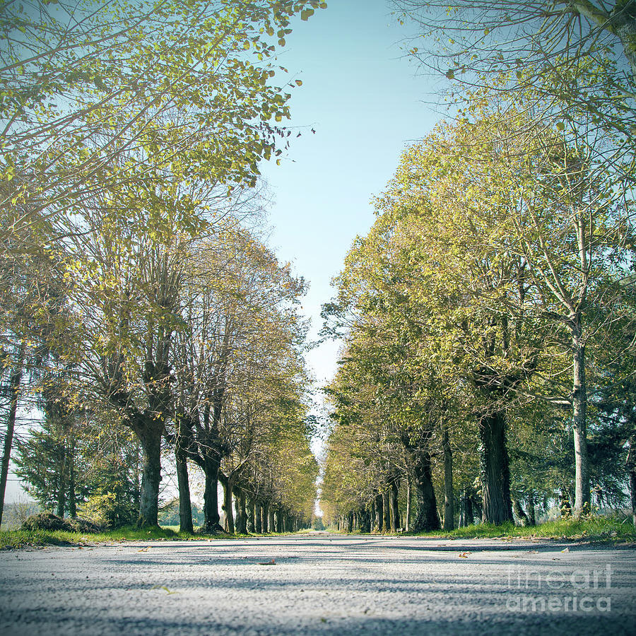Country road tree lined perspective in autumn with cold tone by Gregory DUBUS