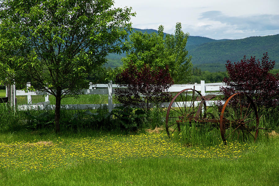 Country Setting In Maine by Karol Livote