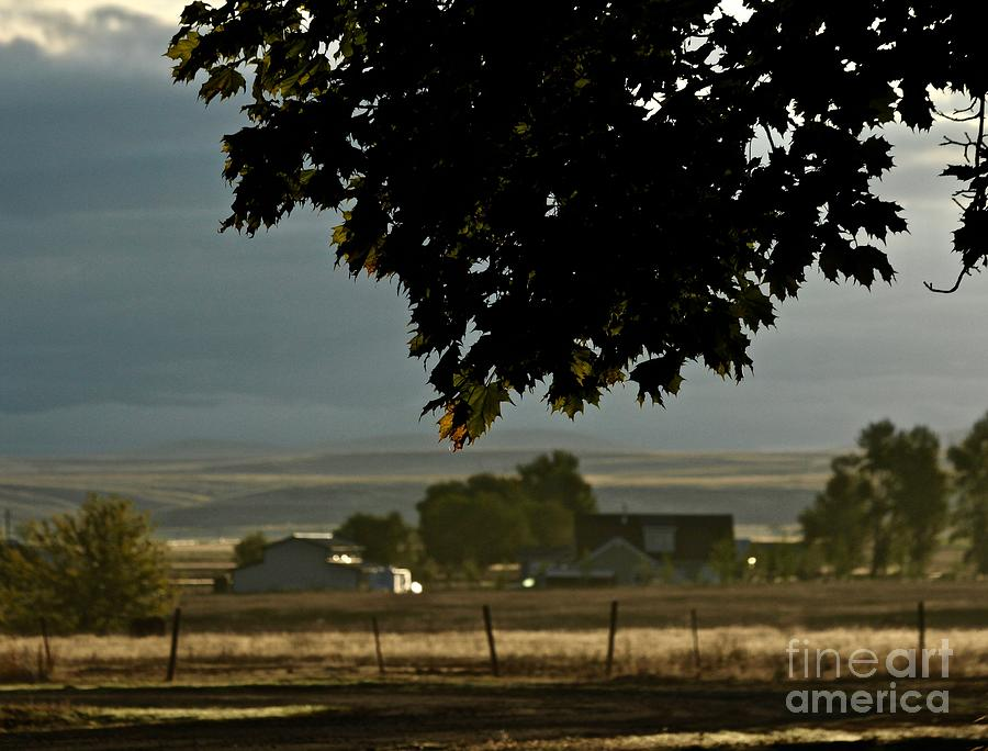 Country View by Ann E Robson