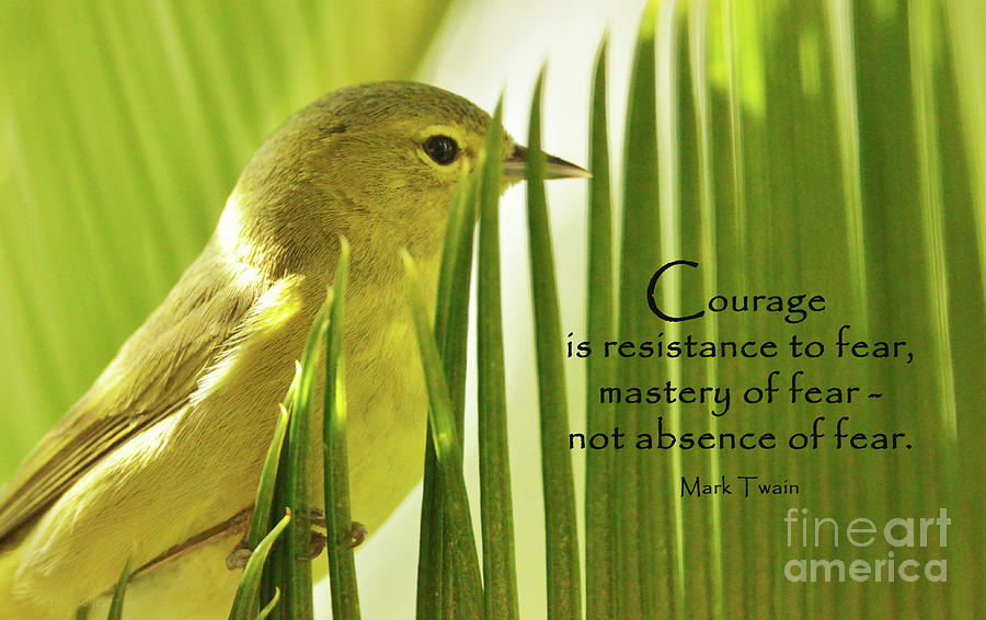 Courage On The Palm Photograph