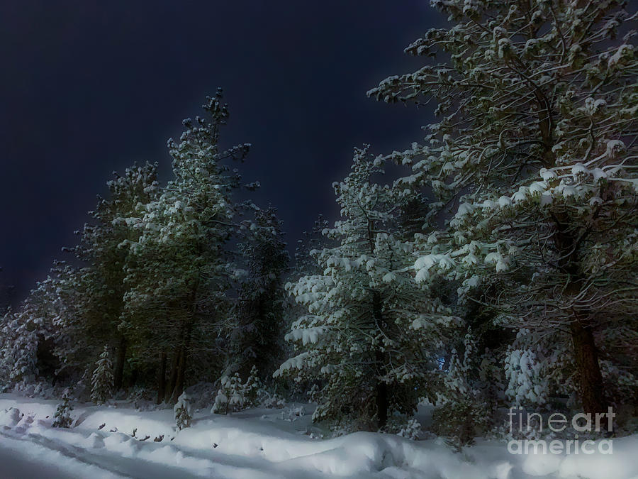 Covered Trees by Stan Townsend