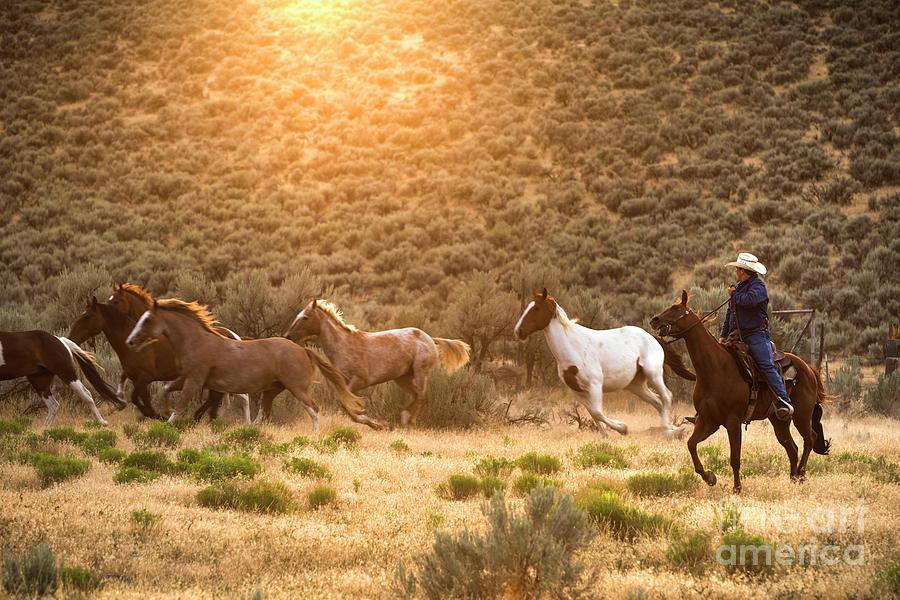 Cowboy Herding Wild Horses by Diane Diederich