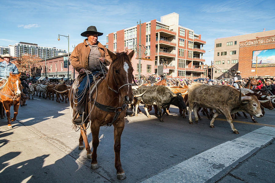 Cowboys and Longhorns In The City  by James BO Insogna