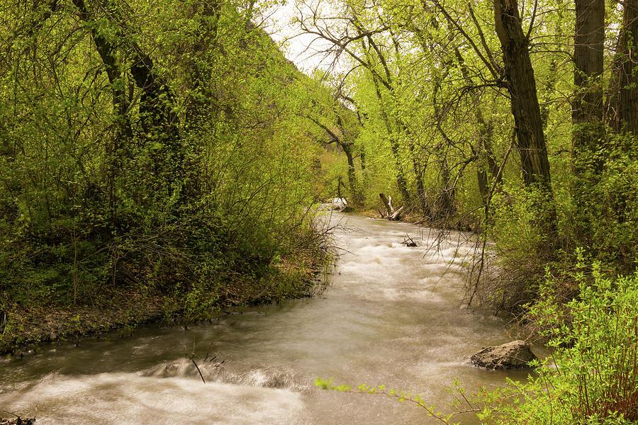 Cowiche Creek Photograph