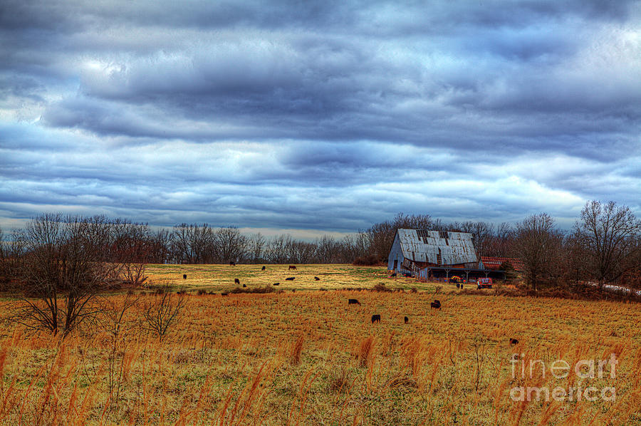 Cows by a Barn by Larry Braun