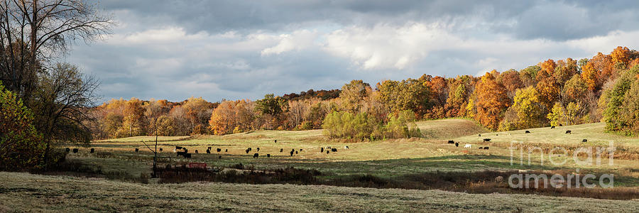 Cows in the Field  Photograph by Larry Braun
