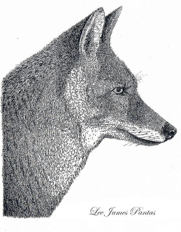 Coyote Drawing - Coyote by Lee Pantas