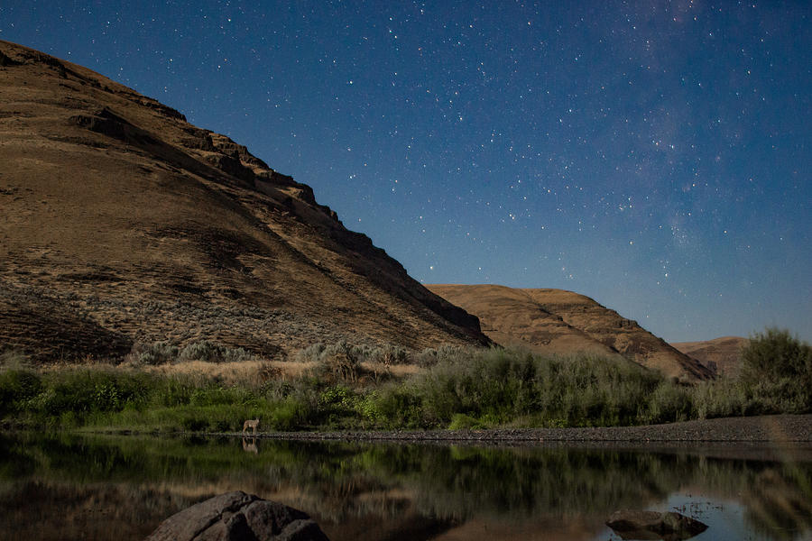 Coyote under the stars on a riverbank Photograph by Tyler Hulett