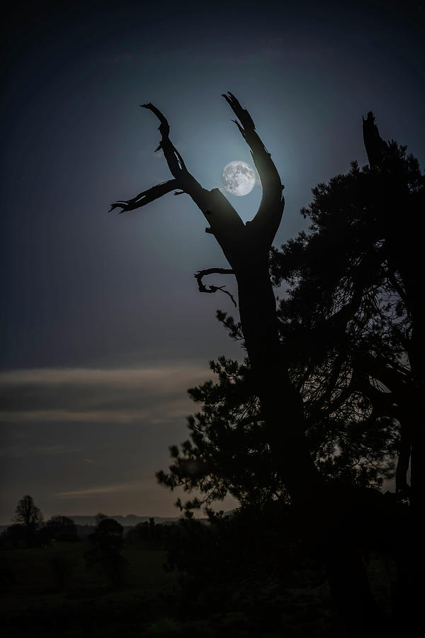 Cradle The Supermoon Photograph