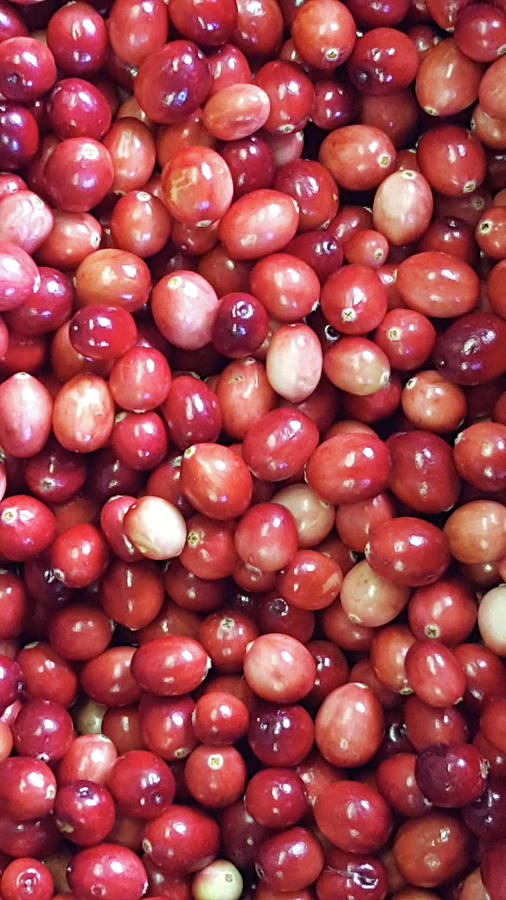 Cranberries Photograph by Trevor Slauenwhite