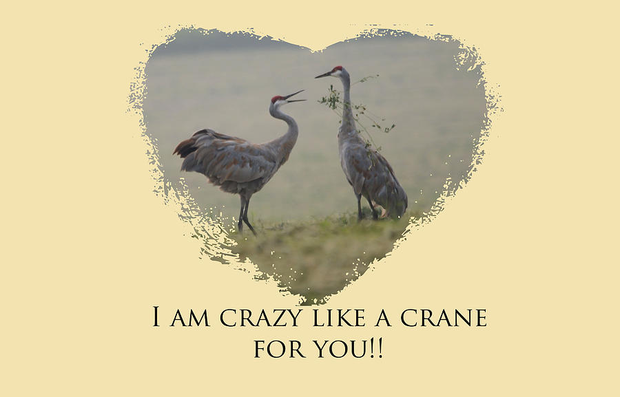 Crazy Like A Crane by Whispering Peaks Photography