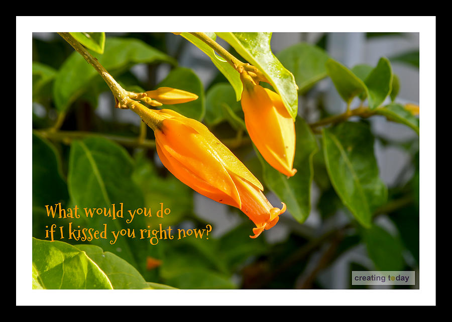 Creating Today Inspiration 24016 Photograph