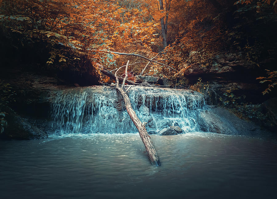 Creek In The Autumn Forest Photograph