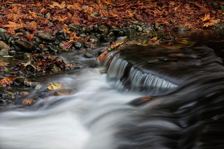 Creekside Colour Photograph