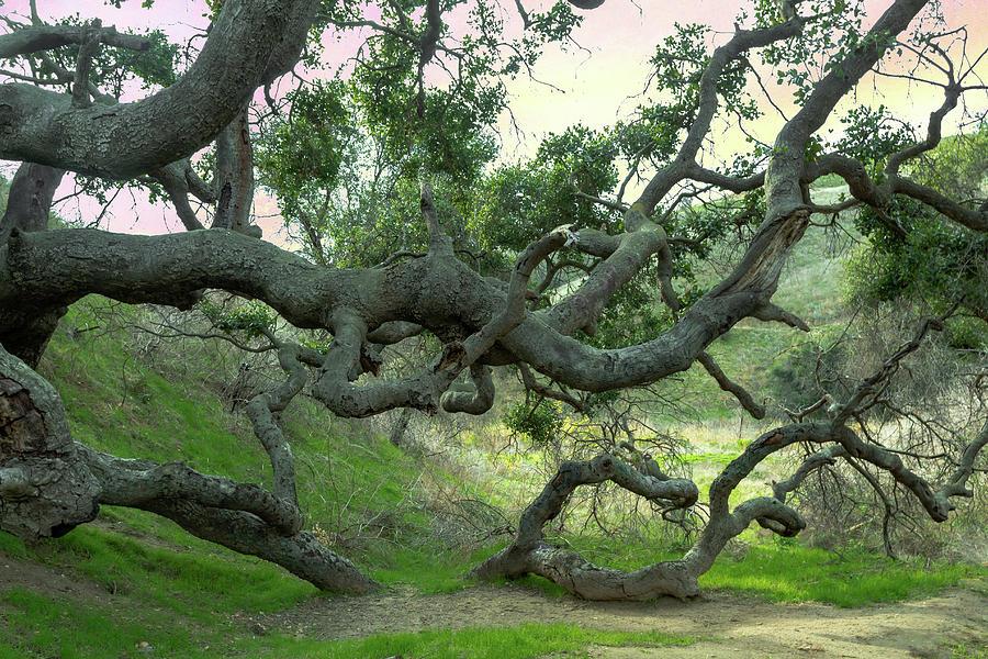 Creepy Tree by Alison Frank
