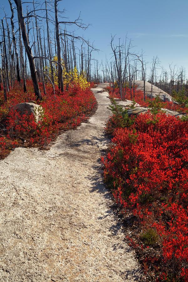 Crimson Trail by Irwin Barrett
