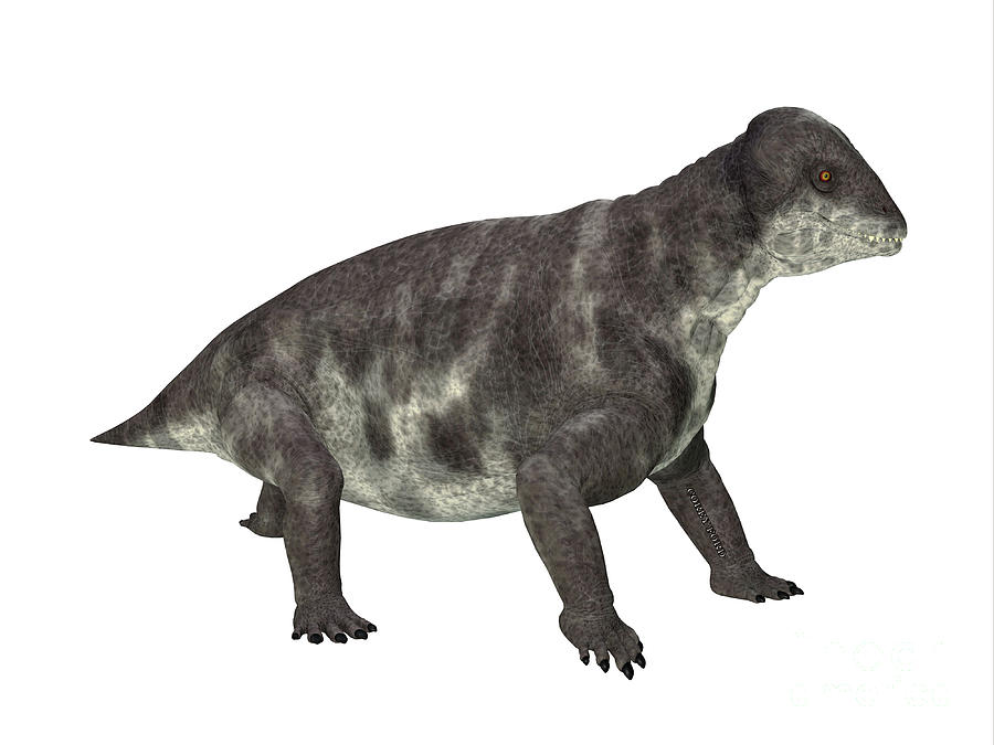 Criocephalosaurus Dinosaur Side Profile Digital Art