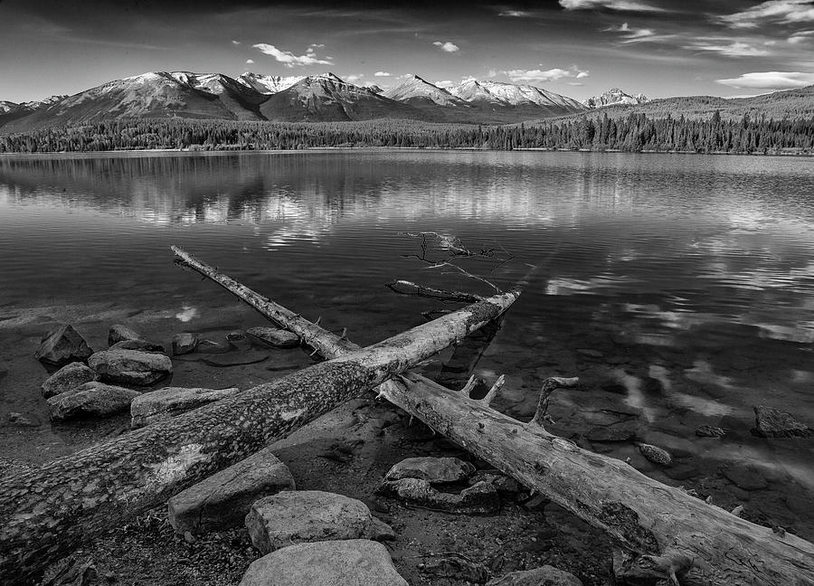 Crossing Logs by Ronald Santini