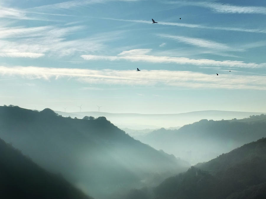 crows - misty morning valley by Philip Openshaw