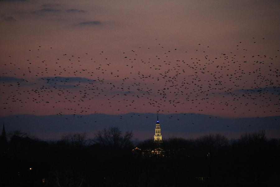 Crows Over Colby by John Meader