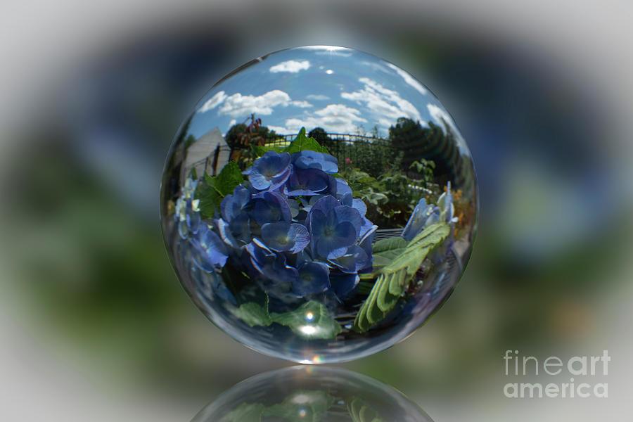 Crystal Ball Series-nikko Blue Hydrangea Photograph