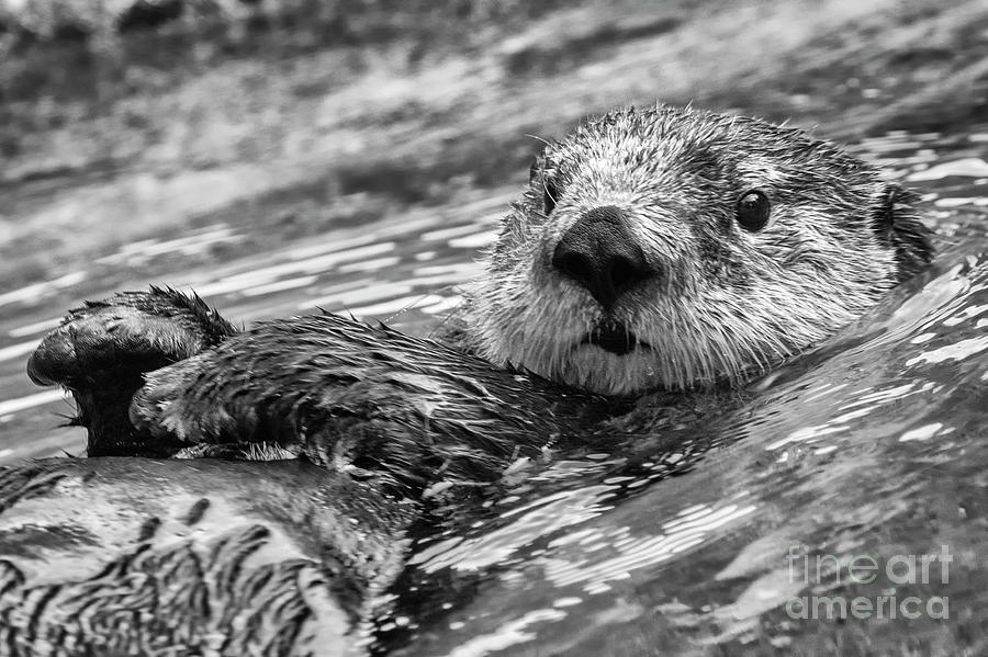 Cute Otter by Sonya Lang