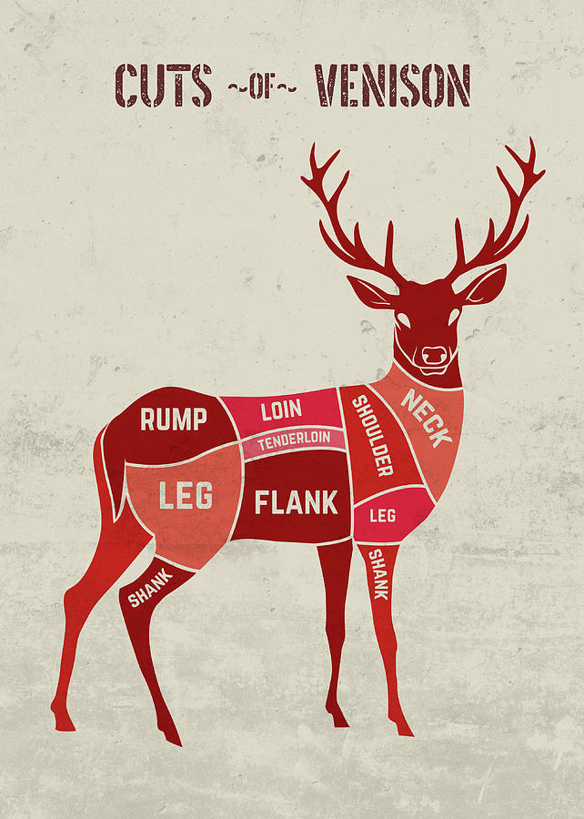 cuts-of-venison-chart-butcher-meat-restaurant-and-fine-dining-design-turnpike.jpg