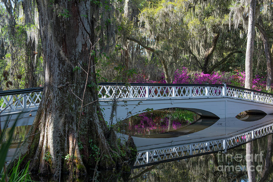 Cypress Lagoon - Magnolia Plantation Photograph