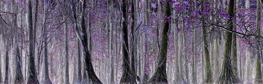 Cypress Lean - Crop Photograph