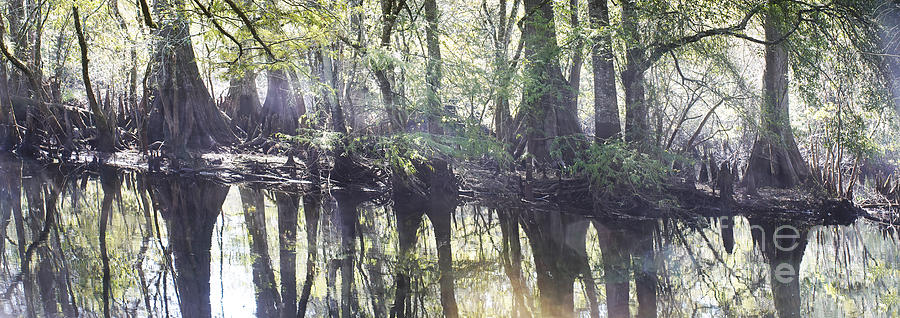 Riverbank Photograph - Cypress Tree Lined Riverbank With Diffused Sunlight by Felix Lai