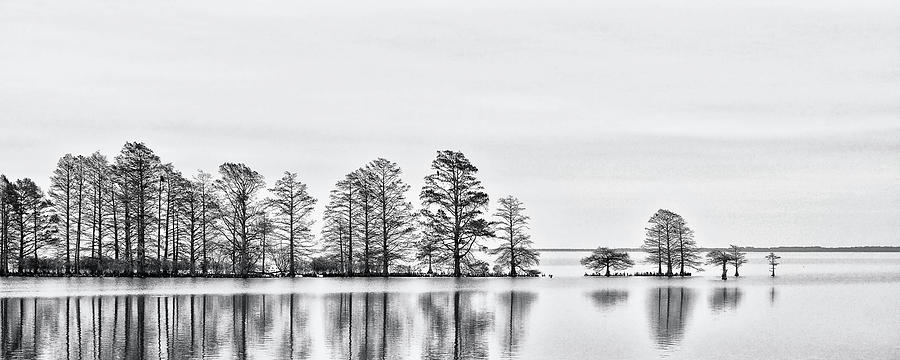 Cypress Trees Photograph - Cypress Trees at Lake Mattamuskeet NWR by Bob Decker
