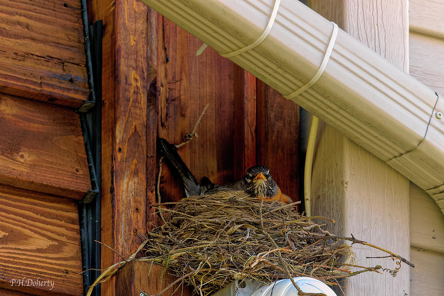 Dads Turn On The Nest Photograph