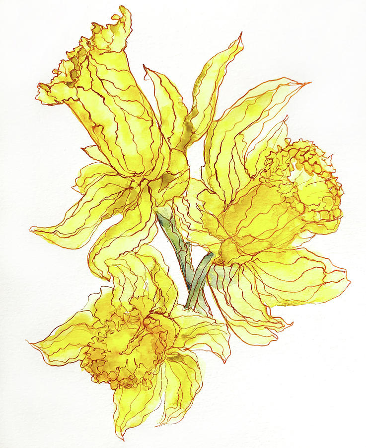 Watercolor Painting - Daffodils by Kelly Edwards