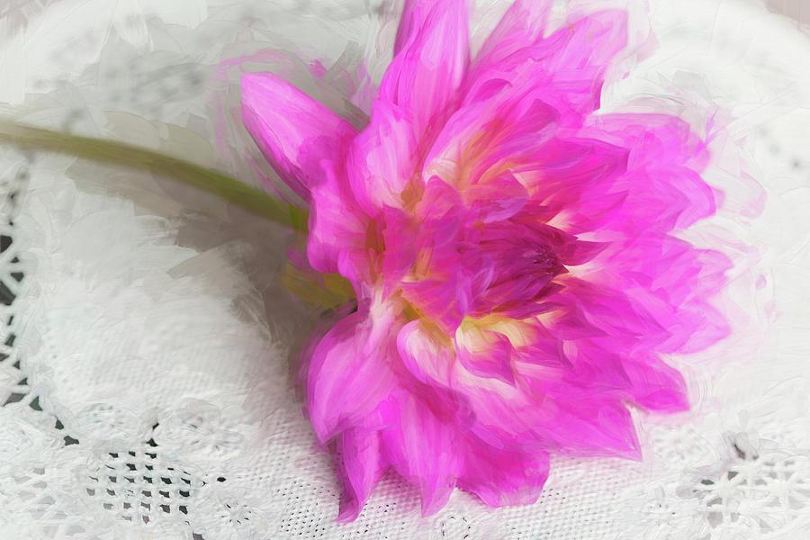 Dahlia Beauty Photograph
