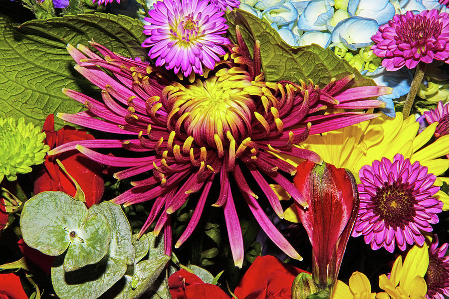 Dahlia Purple And Yellow Purple Asters Hydrangea Yellow Daisy Green Leaves 2 832020 0745 Photograph by David Frederick