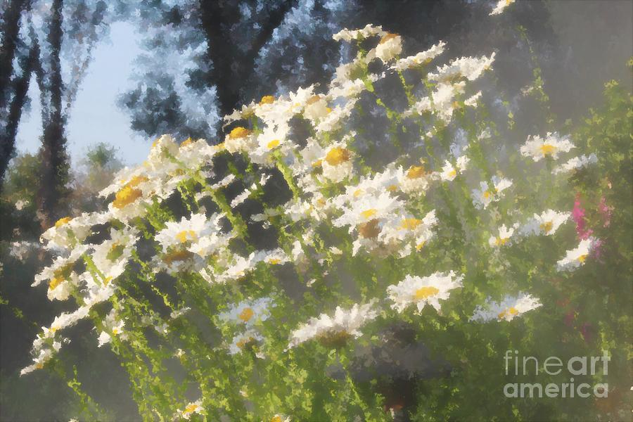 Daisies At The Vineyard Photograph