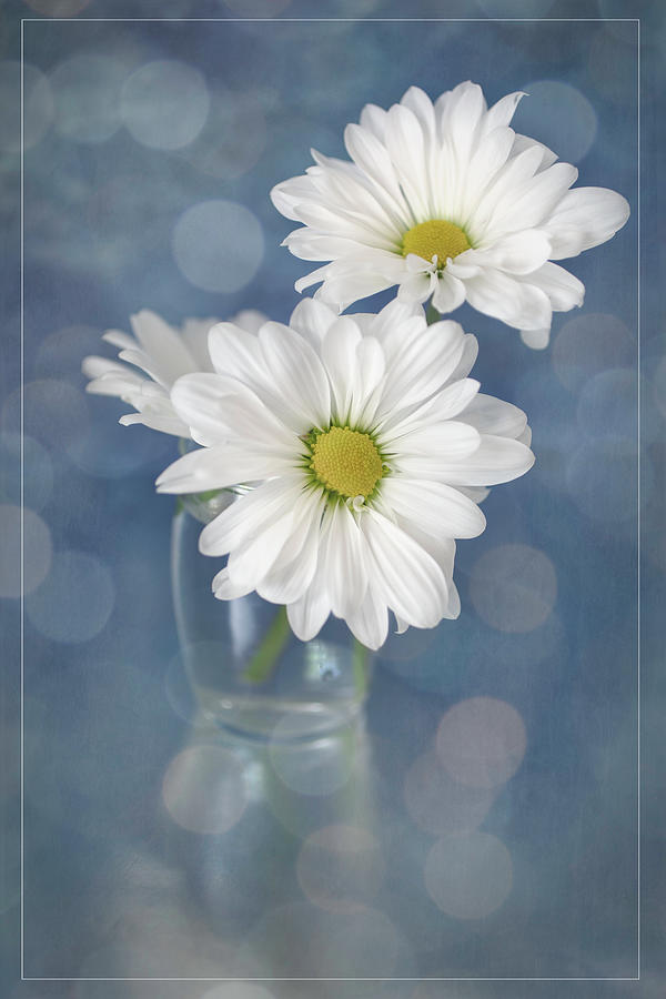 Daisies In A Glass Vase Photograph