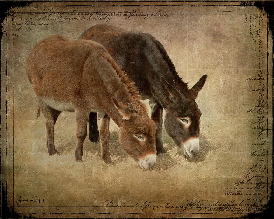 Donkeys Digital Art - Daisy and Wilma by Linda Lee Hall