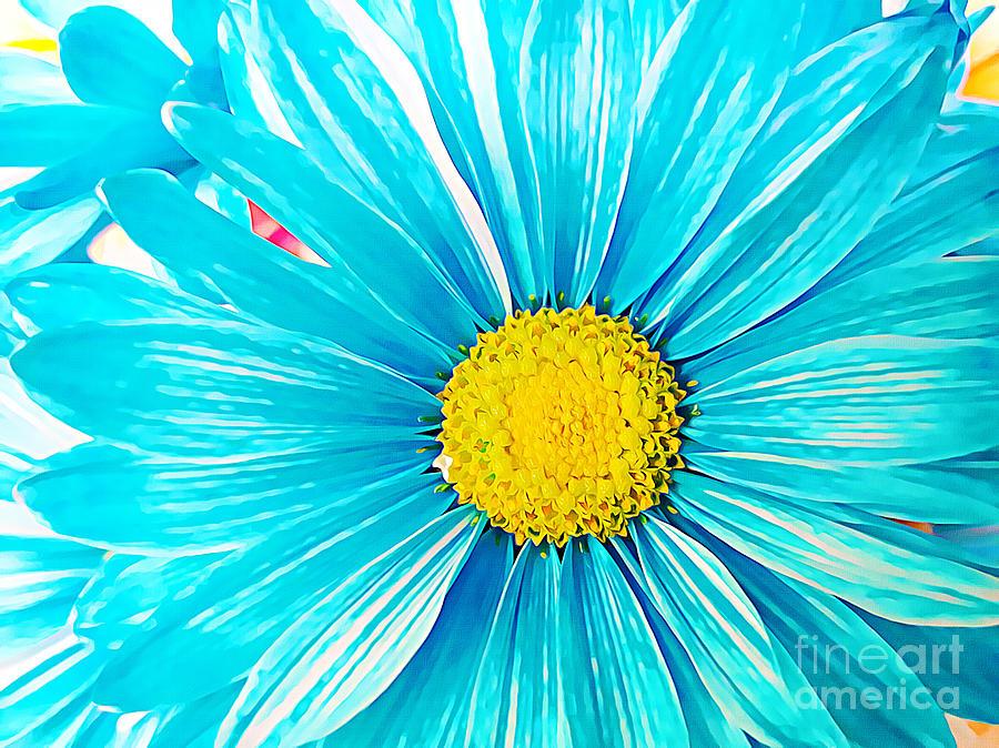 Daisy Blue by Tracy Ruckman