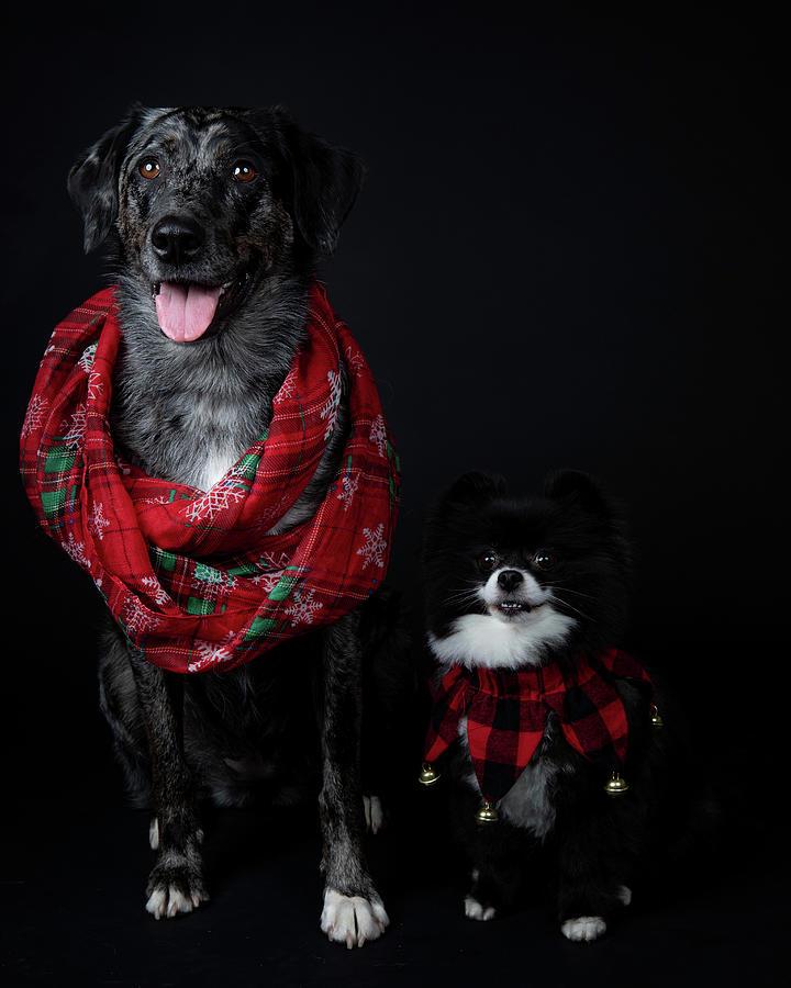 Dakota And Friend Photograph