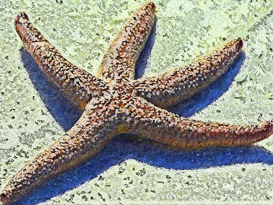 Dancing Cayo Costa Starfish Impressionism by Island Hoppers Art