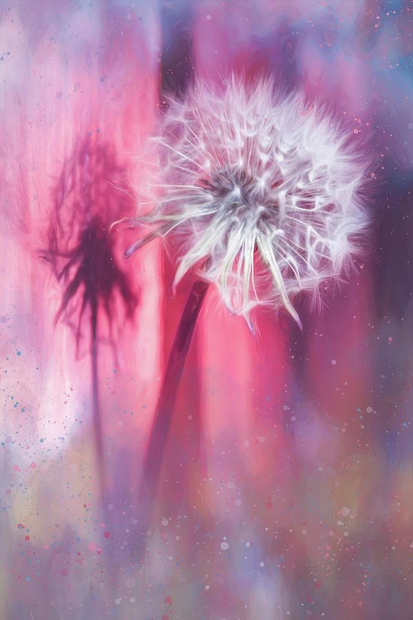 Dandelion Shadow Painterly Pastels Photograph