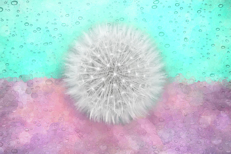 Dandelion Wishes Pastel Pink And Mint Green Photograph